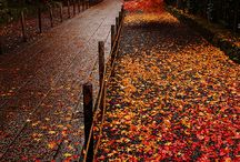 Fall colors and sights / by Suzanne Leonhart