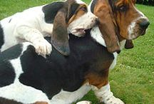 Beloved Bassett  / Bassett hounds / by Mary Nelson