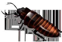 :) Bug Bye Bye / by Samie Chapman-Cummings