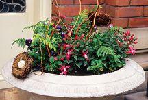 garden inspiration / by Kathleen Lovett