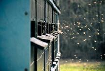 Prim Bee Skeps & Bee's  / Sweet Honey & Bee's ..... / by Heidi Adams Ramsey