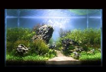 aquascape / by Nadine F (white butterfly)