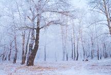 Winter Wonderland / by Jennie Sanderson