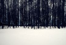 winter / by Marissa Madison