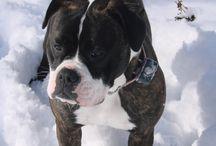 Bulldogs / by Polly Kelly