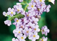 Summer Bloomers / Summer, especially in the South, can take its toll on plants and gardeners alike. Beat the heat with these summer bloomers! / by Southern Living Plant Collection