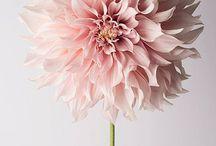flower power / by Kelly Glenn