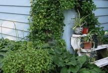 my garden / by Anne deFuria