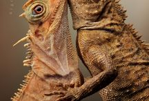 REPTILES / by Marcia Kiger