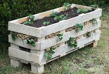 Green thumbs / Garden & diy / by Leigh Fowler