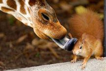 Cute Animals / by Cheyenne