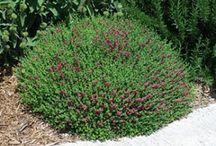 curbside garden ideas / by Shelly Penko