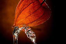 ORANGE / Outstanding Orange! / by Lynne Miller