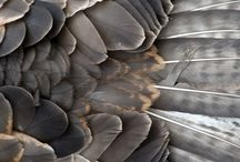 Beautiful Surfaces / by Gina Kimmel