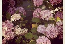 Garden / by Megan Wells
