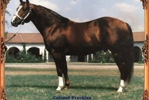 American Quarter Horses / American Quarter Horses Stallions, Mares and Foals / by Gretchen Danals