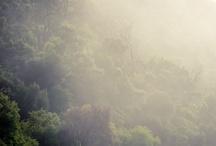 Fog / by Vanessa King