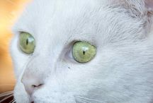 White Cats / by The Great Cat