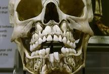Dental / by Richard Disley