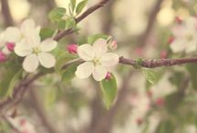 Spring / by Abby