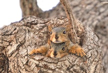 Squirrelly things  / by Alexandra Pruitt