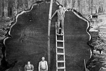 Logging when men were men and trees were trees /  Logging old and new / by Kurt Trabont