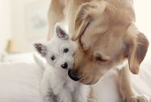 Animals ~ Dogs ♥ / by SE Ⓥ Grl