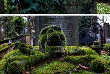 Skulls / by Julia Castro Christiansen