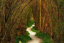 Gardens / by Blake-Jessica Barker