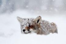Animals :) / by Katharine Newell