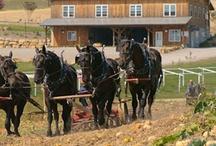 Amish Country / by Tina Layton Smith