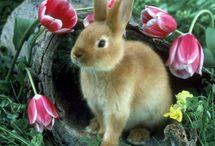 Bunnies!!  / by ~allthingsshabby~