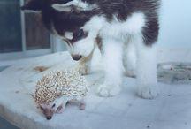 Pets / by Meli Alvarez