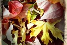 Fall designs / by Stephanie Mata
