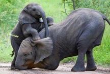 Elephants <3 / by Elaine Barbosa