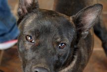 Pet of the Week / Local pets up for adoption. / by Times Record News