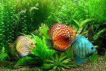 fish / by Dorothy Gerlach