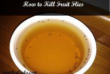 Kill KREEPY KRITTERS / Kill flys, fruit flys, rodents etc / by Michelle Mullins