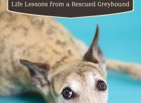 The Dog Stays in the Picture / In the new memoir, The Dog Stays in the Picture, author Susan Morse shares how a rescued greyhound helped her to cope with her empty nest. Read about it and buy the ebook here: http://www.openroadmedia.com/the-dog-stays-in-the-picture / by Open Road