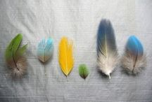 feather and butterflies / by Rebecca Kerr