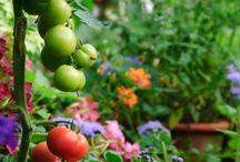Gardens etc,,, / by Connie Whiteside Cleveland