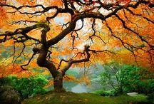 Japanese Gardens / All types of Japanese garden. Japanese garden around the world. / by Abdullah Khamis