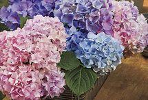 My Flower Garden / by Tonia Garbutt