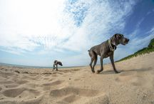 Life with Dogs / All Original Content by Melissa Basileo / by Melissa Basileo