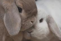 my furry little bunnies / by Stephenie Hutchison