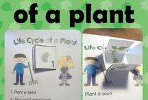 Science - Plants / by Cheryl Adams