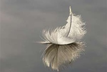 Feathers / by Helma Cauberg