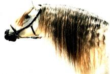 HORSES / by Beltran Pedregal Pardo