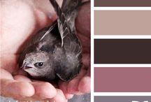 Color Palettes / by Jessica Bowe
