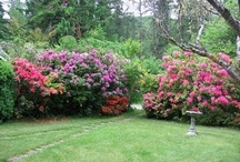 Lovely Gardens / Many of our inns take pride in their gardens and outdoor space.   / by Oregon Bed and Breakfast Guild